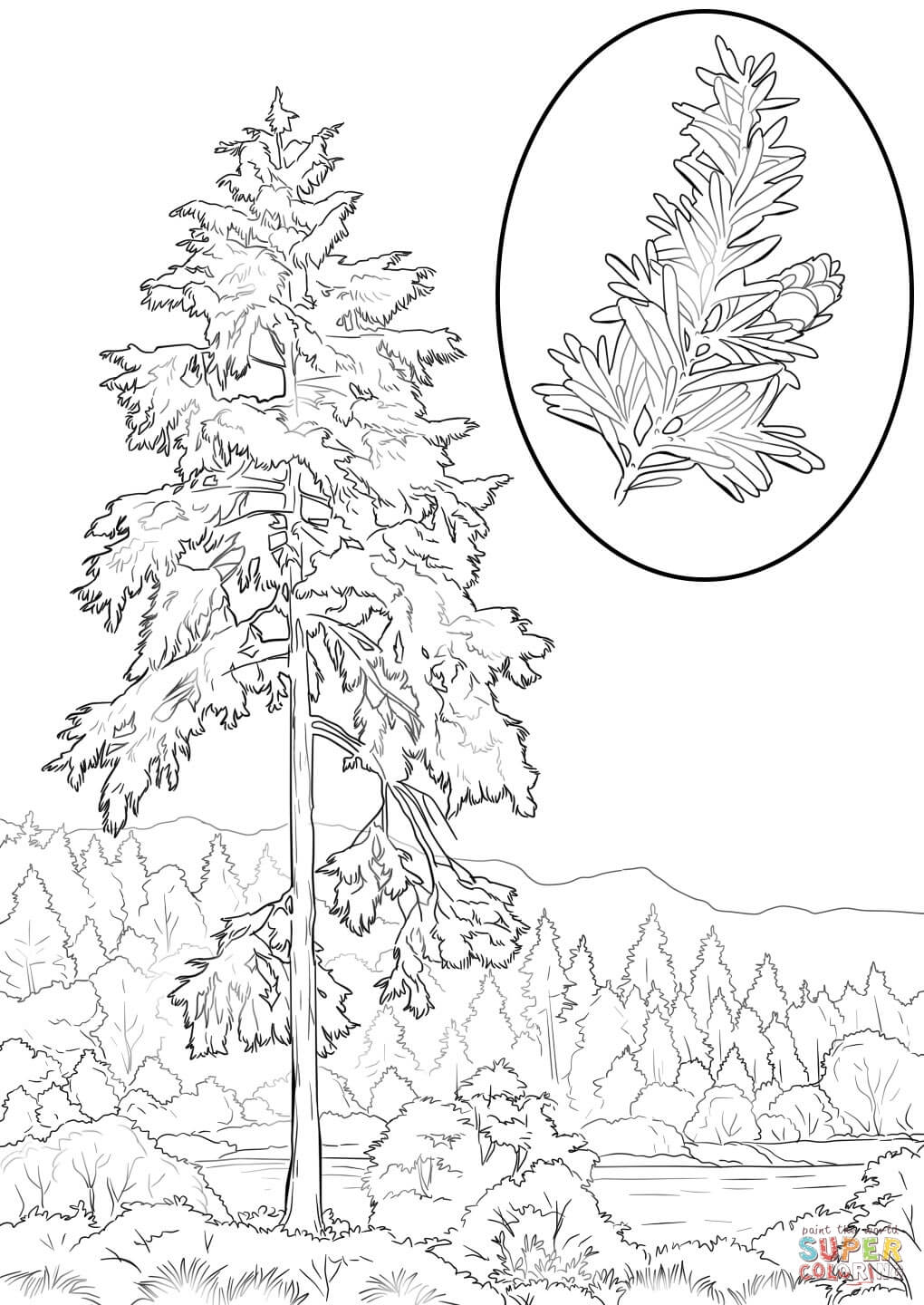 washington state coloring page coloring home
