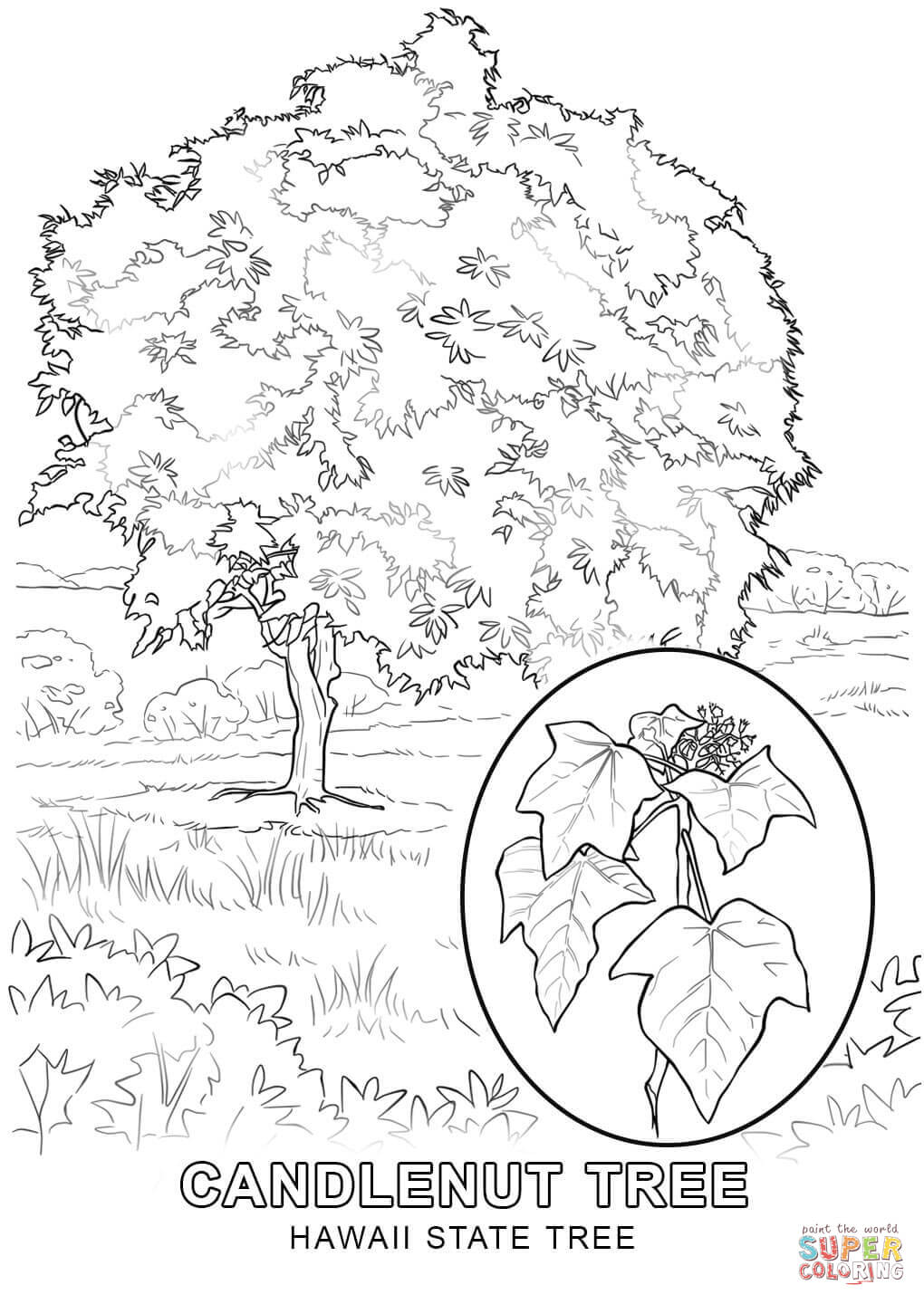Coloring Pages For Hawaii : Hawaii printable coloring pages az