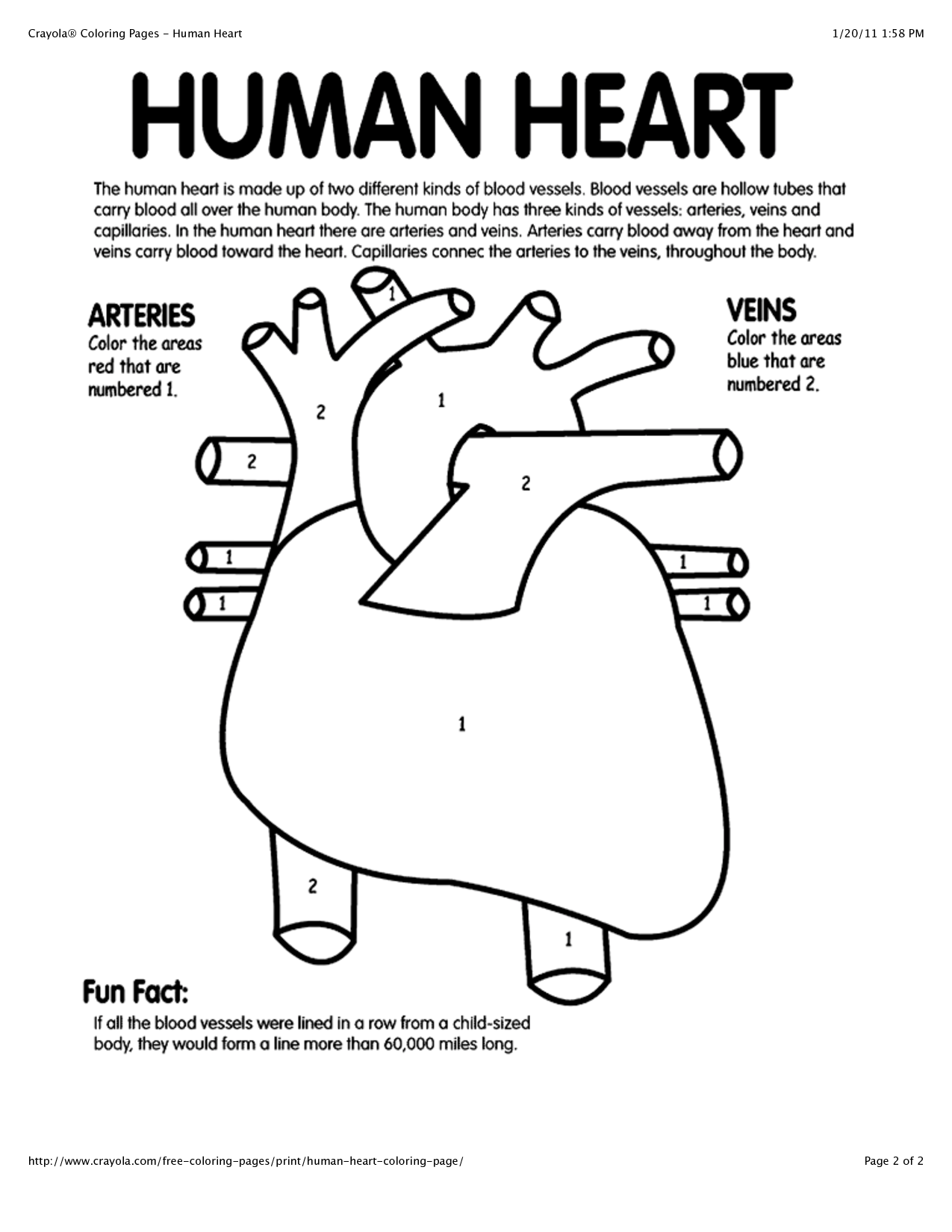 - Anatomy Coloring Pages Heart - Coloring Home