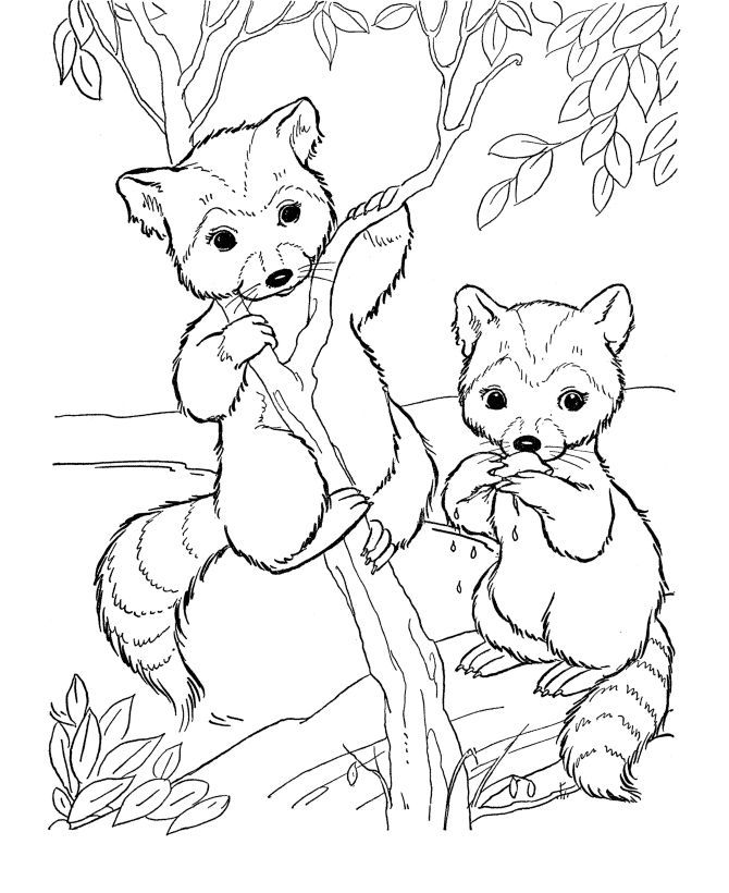 woodland creatures coloring pages coloring home. Black Bedroom Furniture Sets. Home Design Ideas