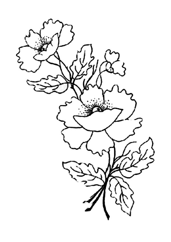 Poppy Flower for Remembrance Day Coloring Page | Color Luna
