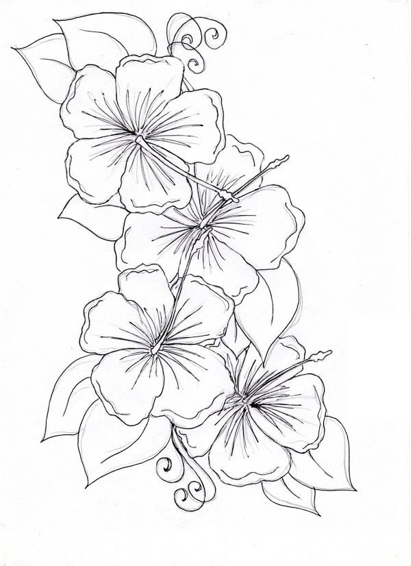 Hibiscus Flower Drawing Coloring Page: Hibiscus Flower Drawing ...