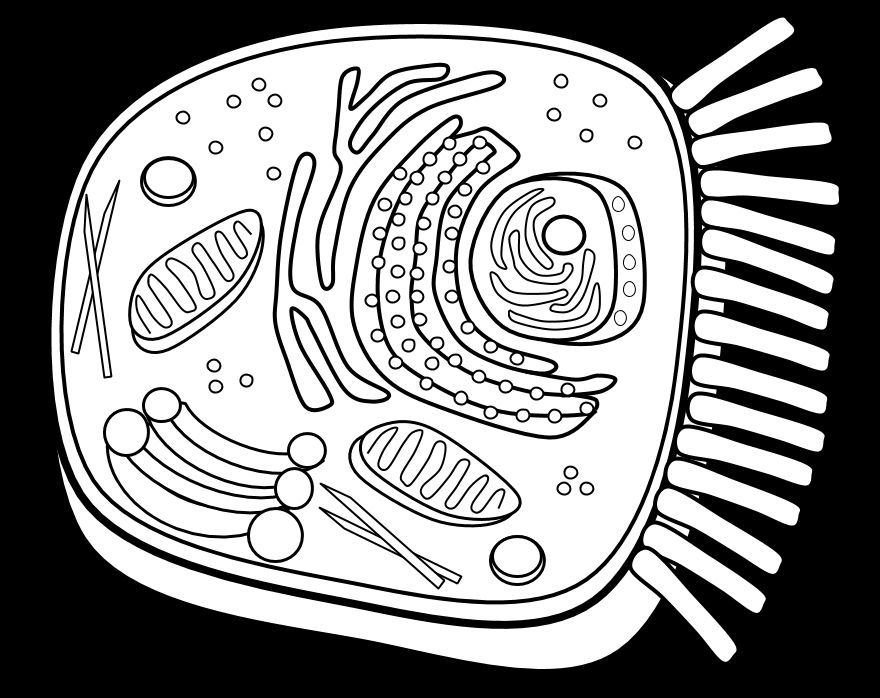 Animal Cell Coloring Pages Page 1