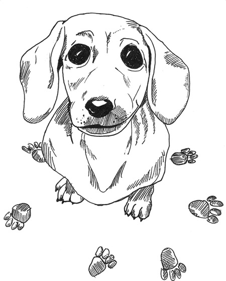 Dachshund Coloring Pages - AZ Coloring Pages