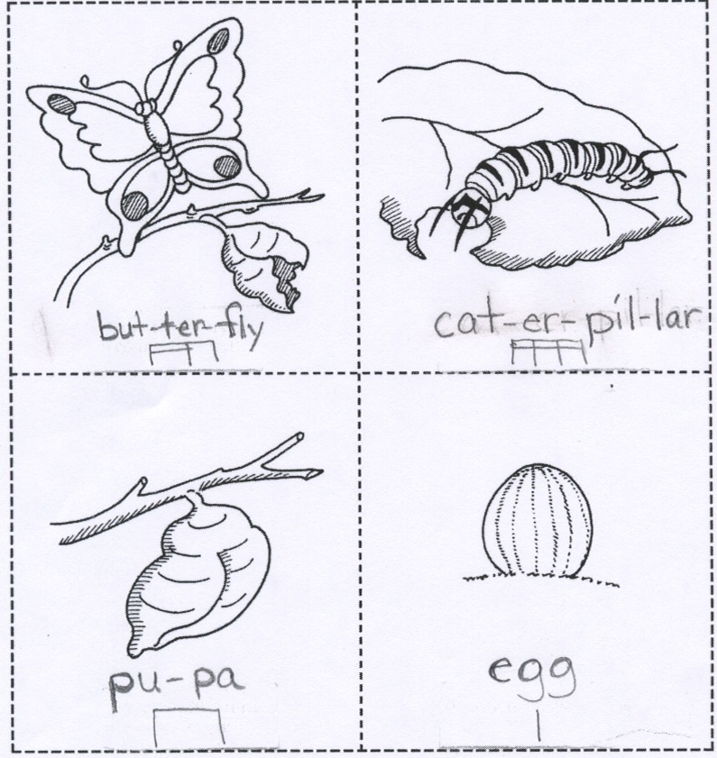 Life Cycle of a Monarch Butterfly coloring page from Butterfly category.  Select fro… | Butterfly coloring page, Butterfly life cycle preschool, Butterfly  life cycle | 841x795