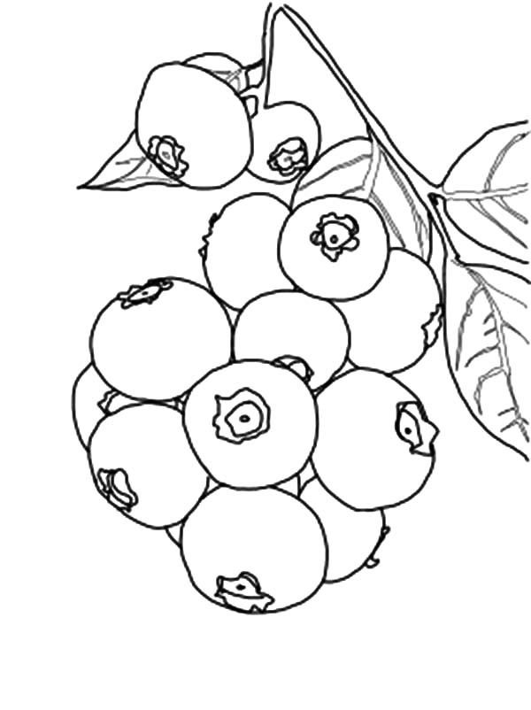 blue berry coloring pages - photo#13