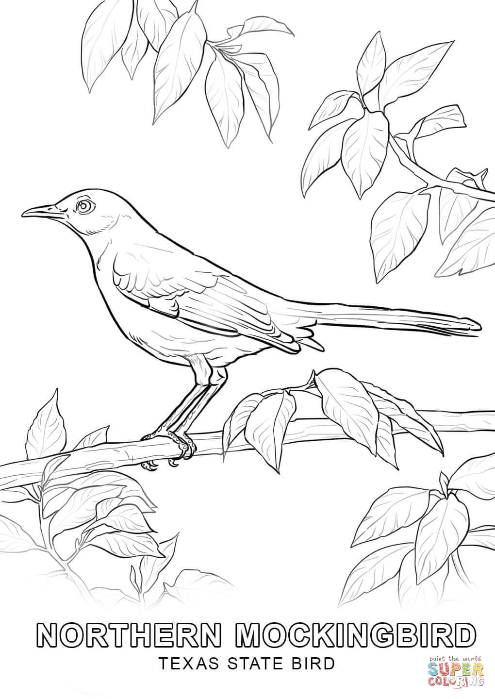 Texas State Bird coloring page