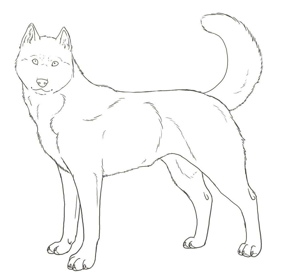 coloring pages huskeys | Siberian Husky Coloring Pages - Coloring Home