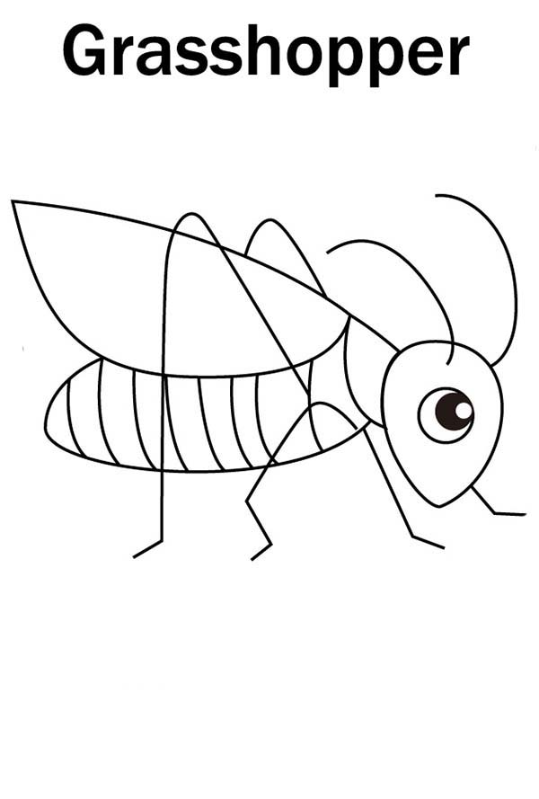Cute Little Grasshopper Coloring Page - Download & Print Online ...