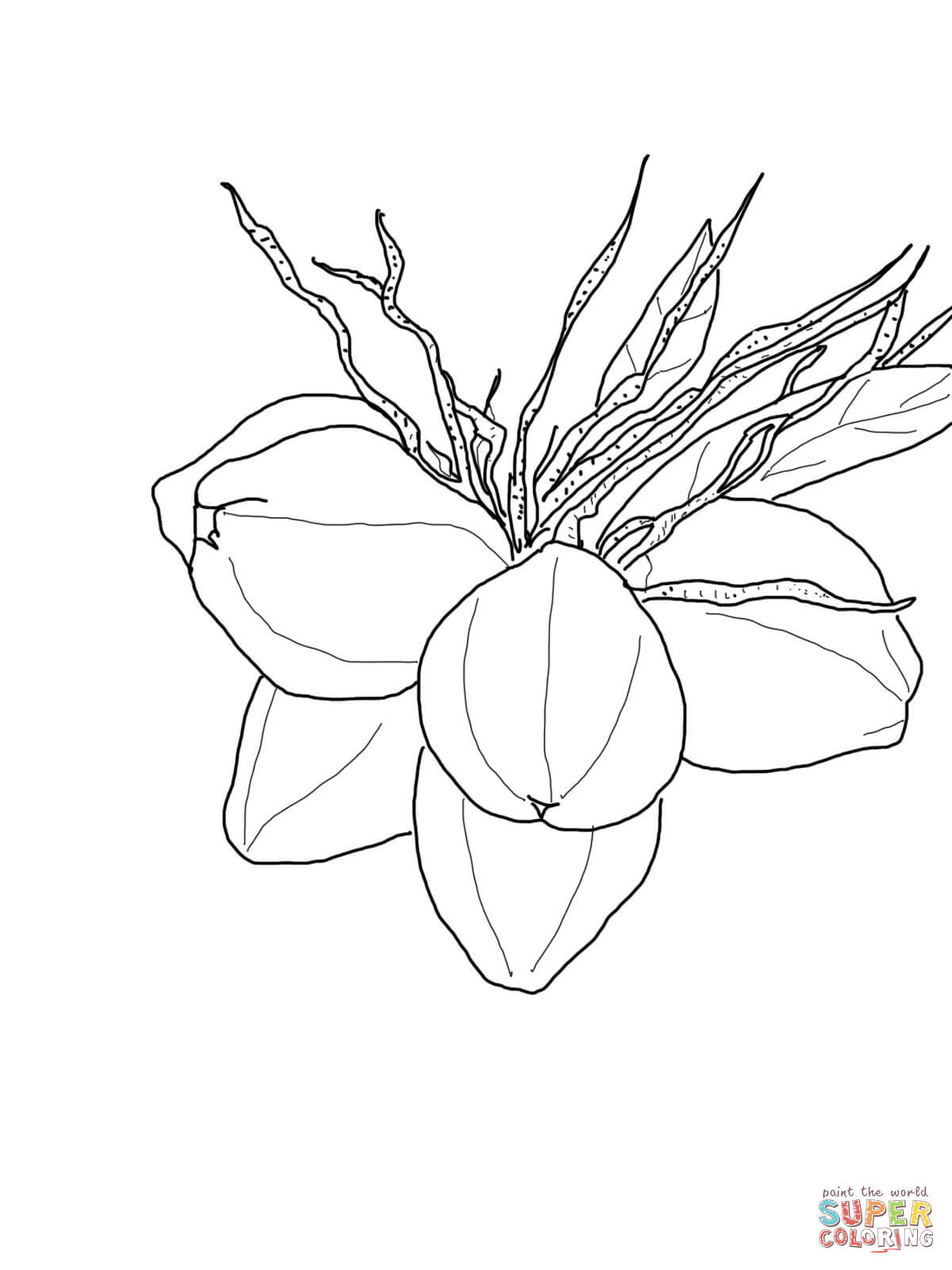 coconut coloring pages - photo#27