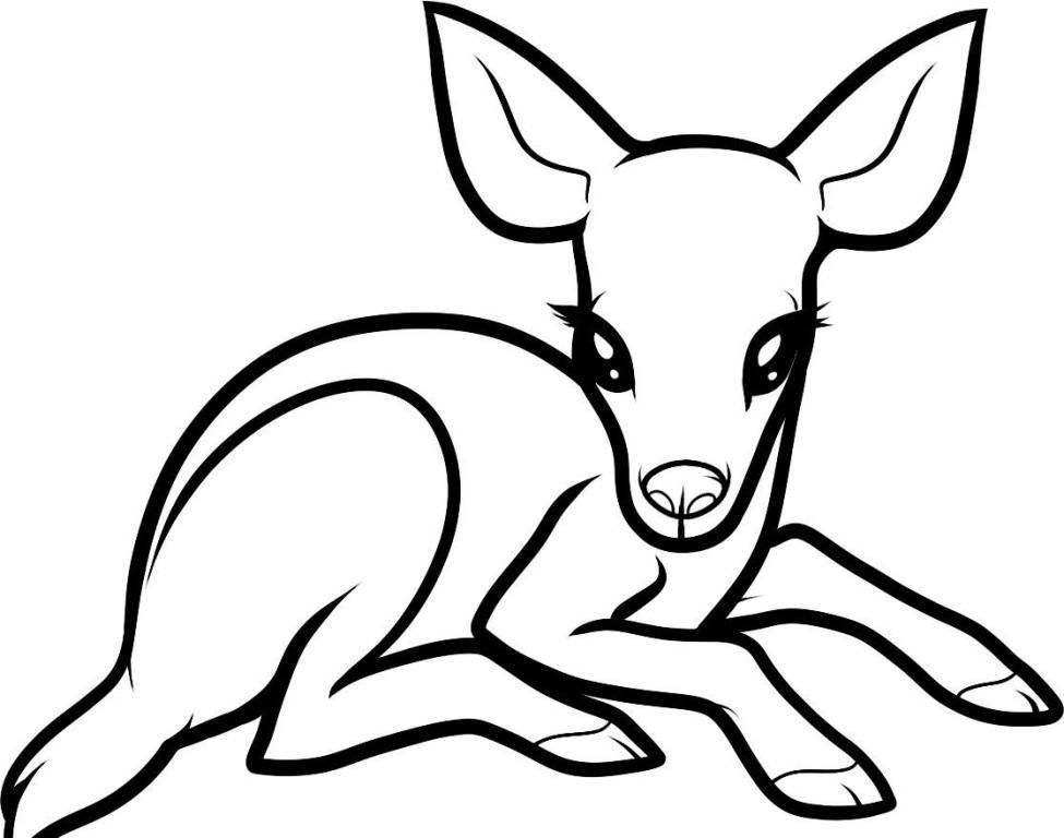 buck and doe coloring pages coloring home