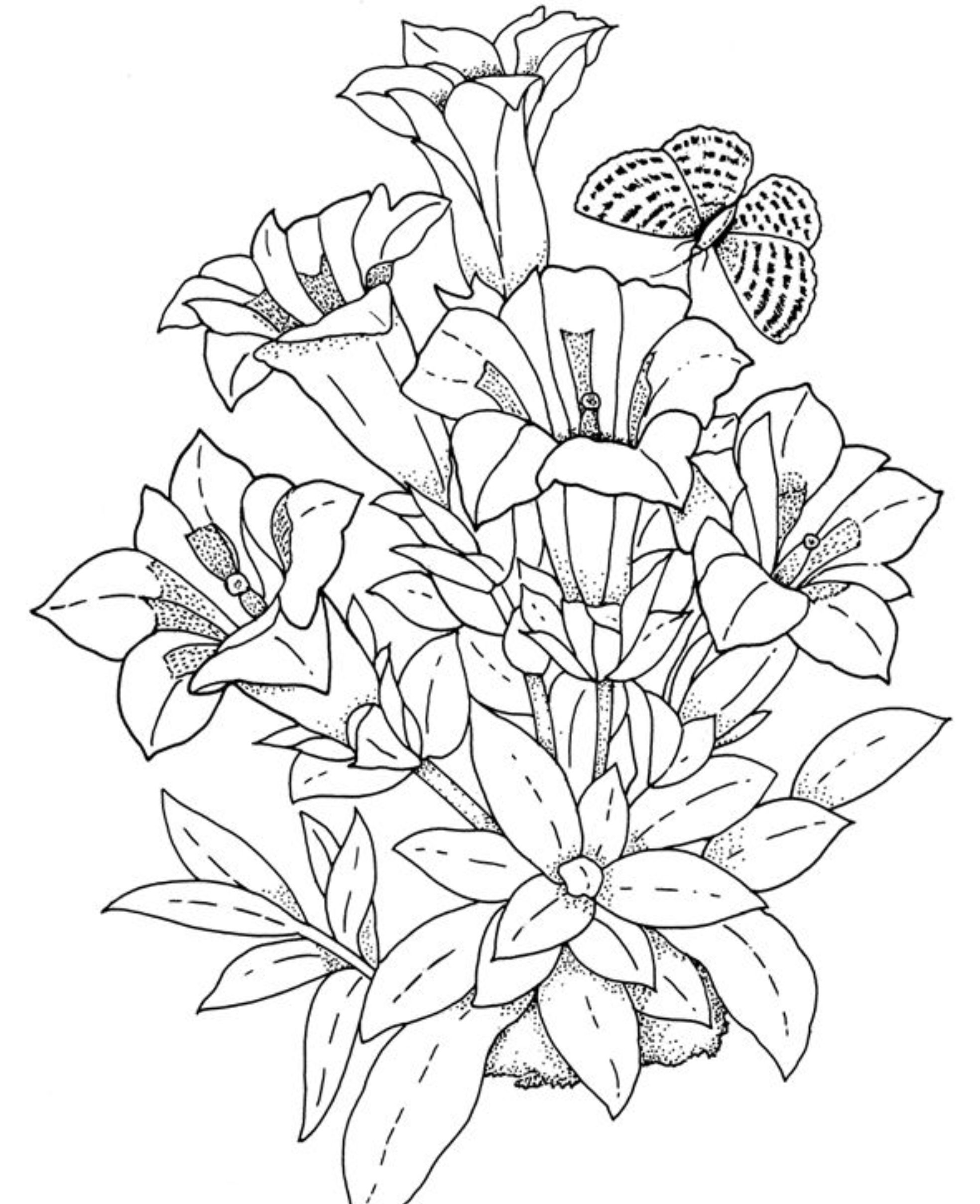 Flower Coloring Sheets : Realistic Flowers Coloring Pages ...