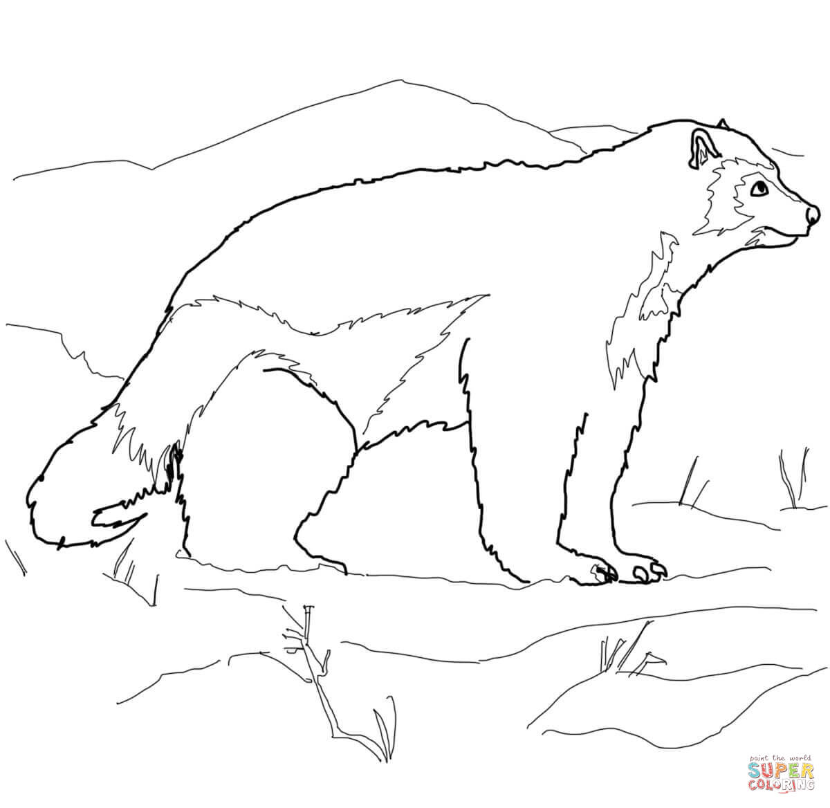 Arctic Wolverine Coloring Page Free Printable Coloring Pages