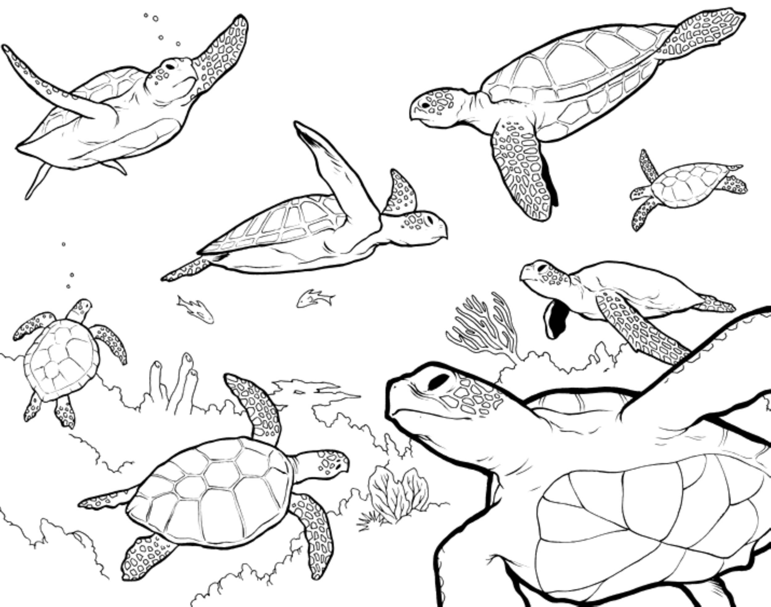 Adult Turtle Coloring SheetsTurtlePrintable Coloring Pages Free