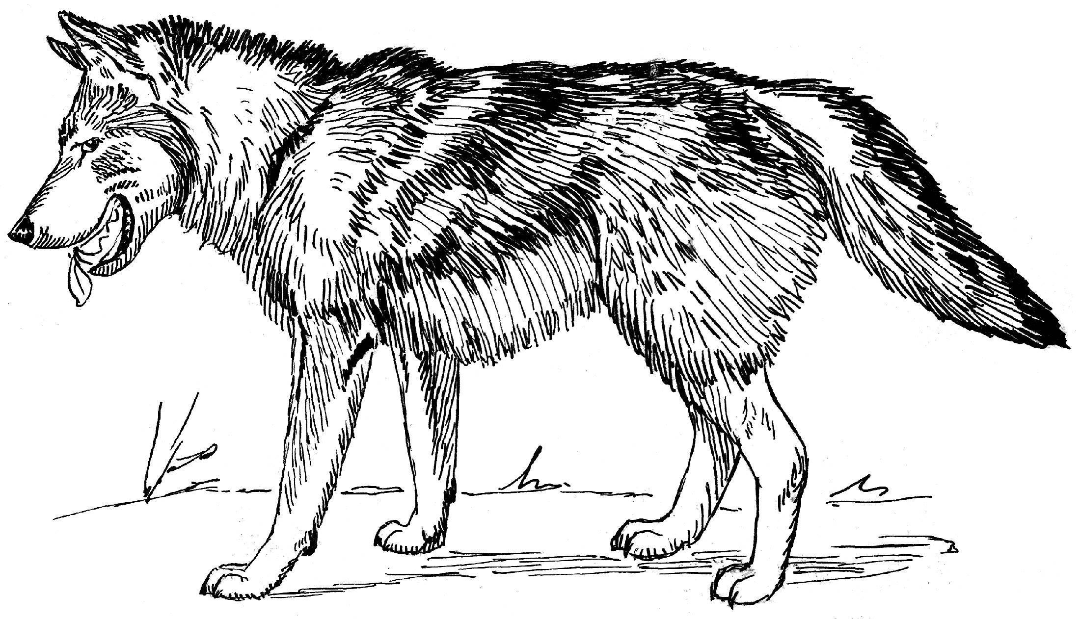 Coloring pages of wolves - Printable Colouring Pages Of Wolves High Quality Coloring Pages