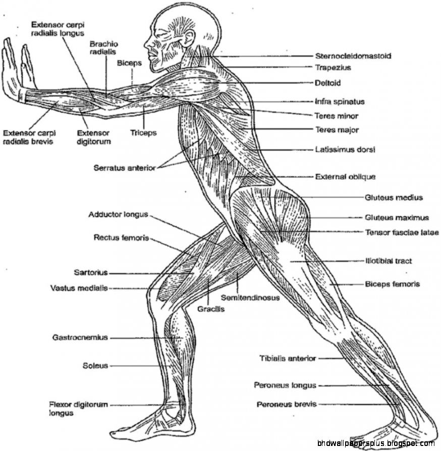- Anatomy And Physiology Coloring Pages Free - Coloring Home