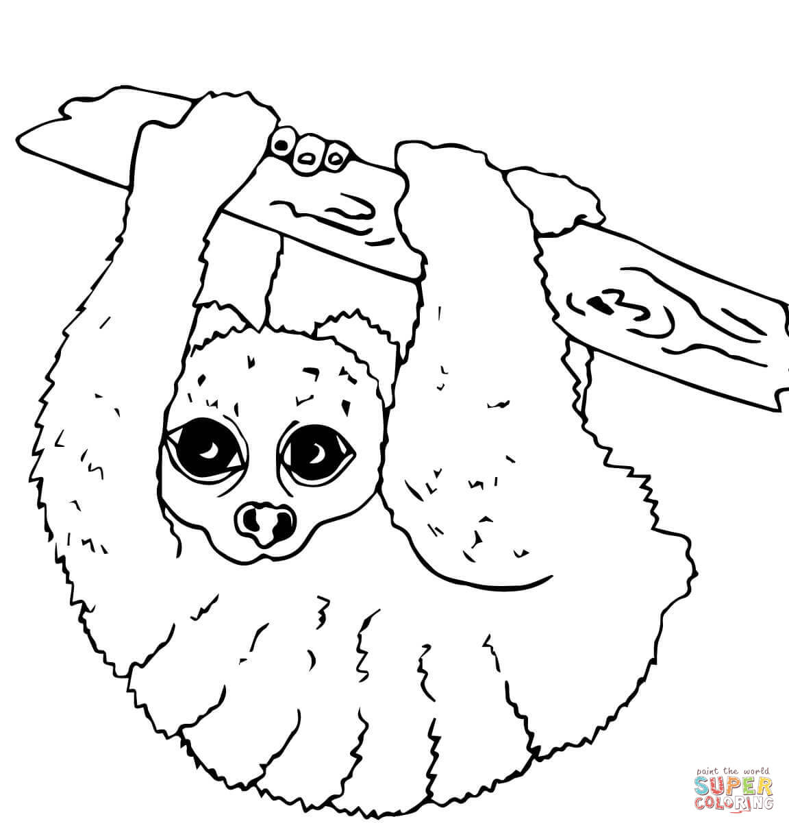Coloring Pages Nocturnal Animals : Pictures of nocturnal animals coloring home