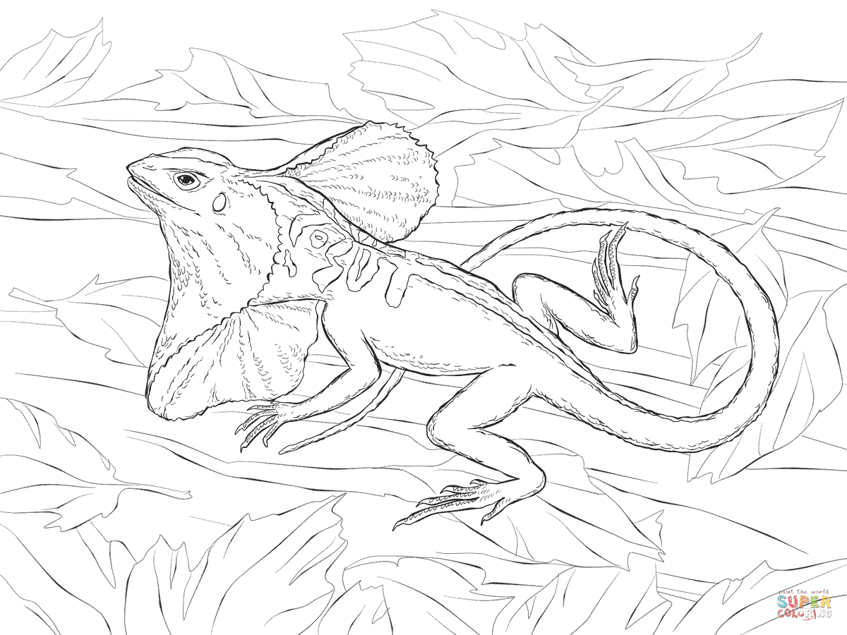 Australian Animal Colouring Pages   900x1200
