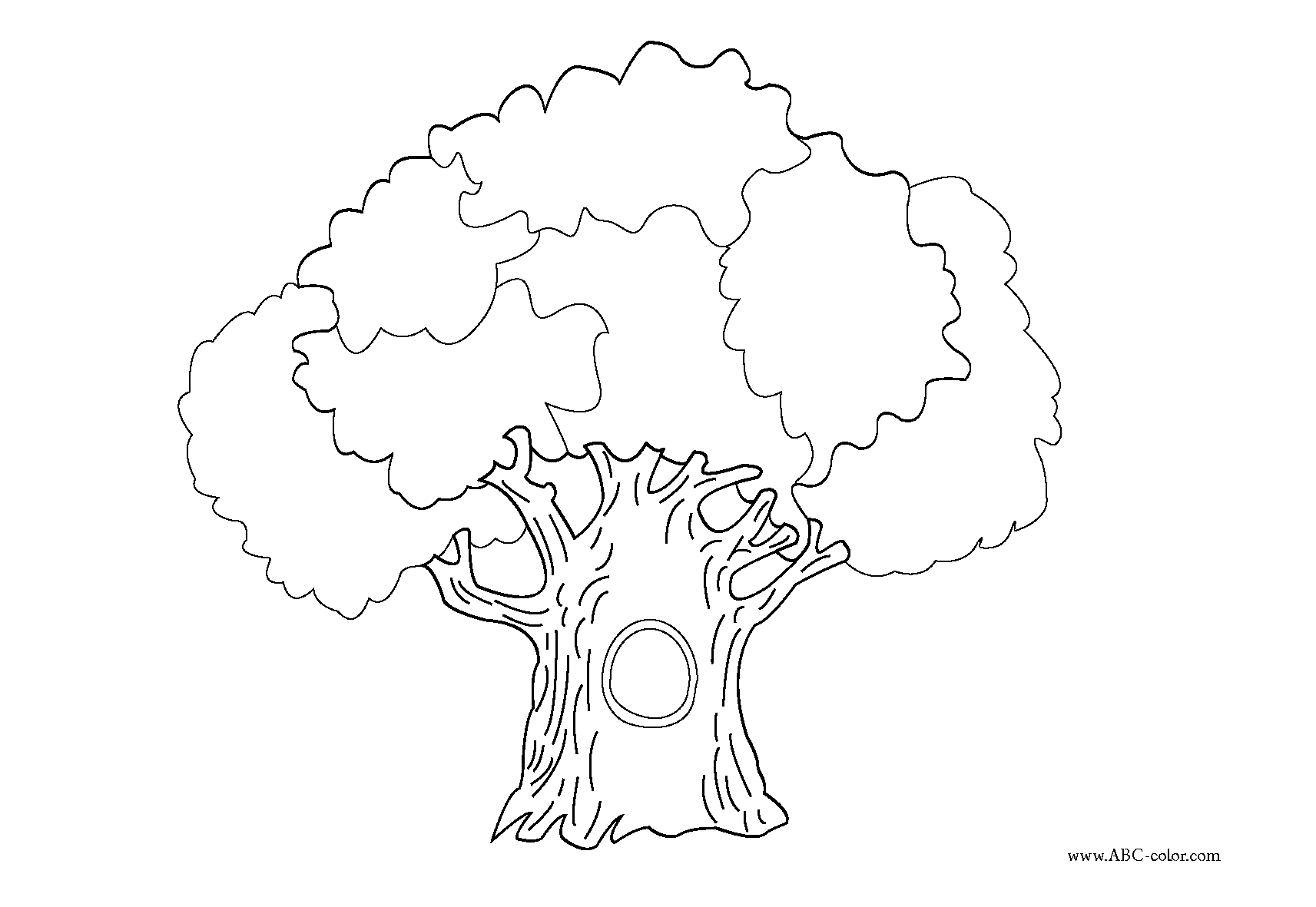 evergreen tree coloring pages - photo#28