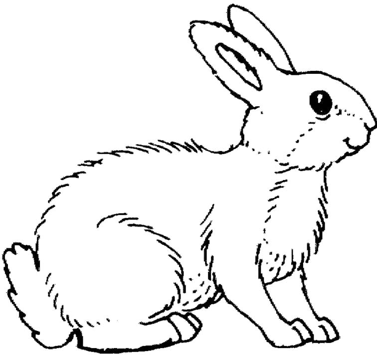 rabbit coloring pages - rabbit color pages az coloring pages