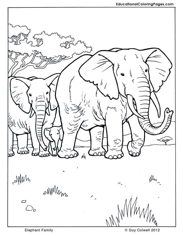 Printable Pictures Of Mammals - Coloring Home