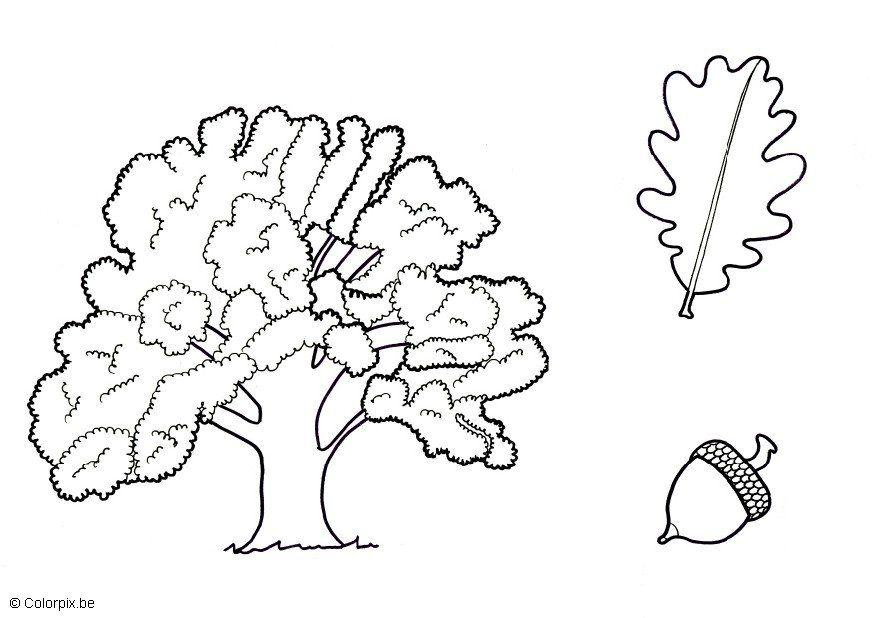 free oak tree coloring pages - photo#12