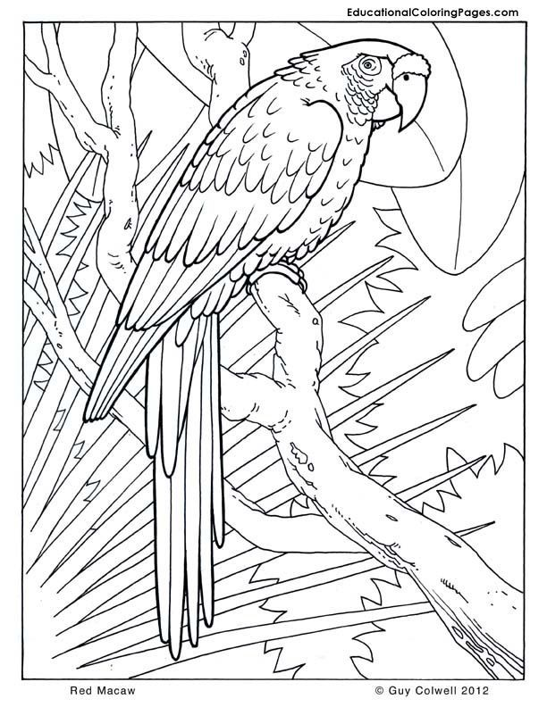 Coloring Pages Parrots Coloring