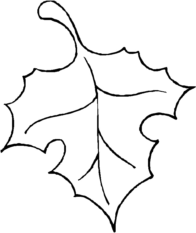 Art Outline Drawings Leaf Outline
