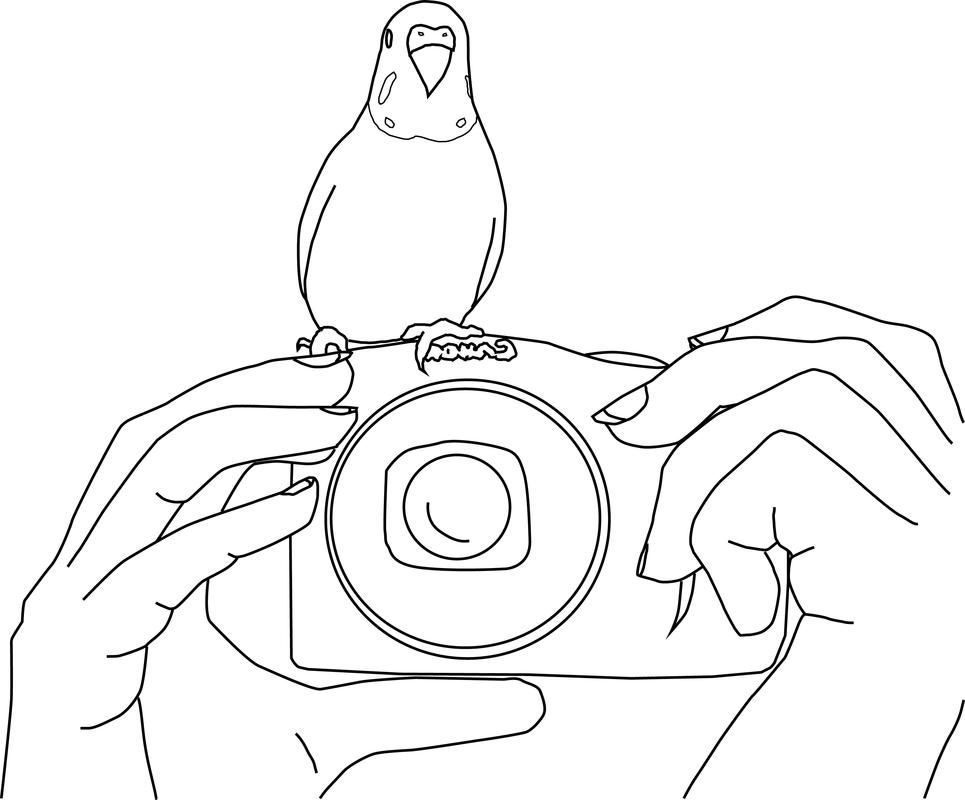 Parakeet coloring pages coloring home for Parakeet coloring pages