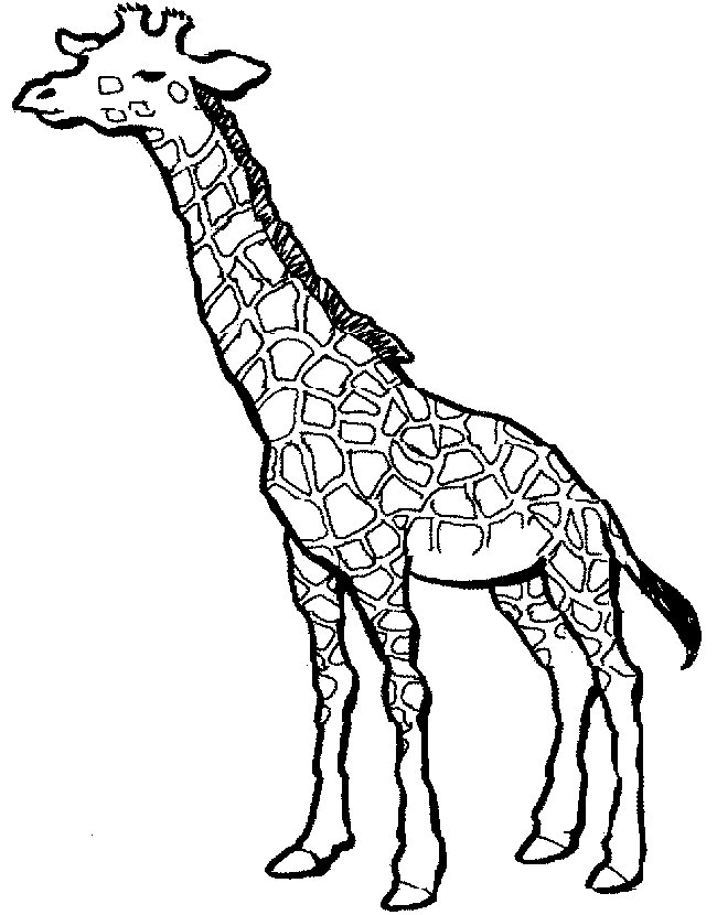 Giraffe Coloring Pages For Kids Az Coloring Pages Giraffe Pictures To Color