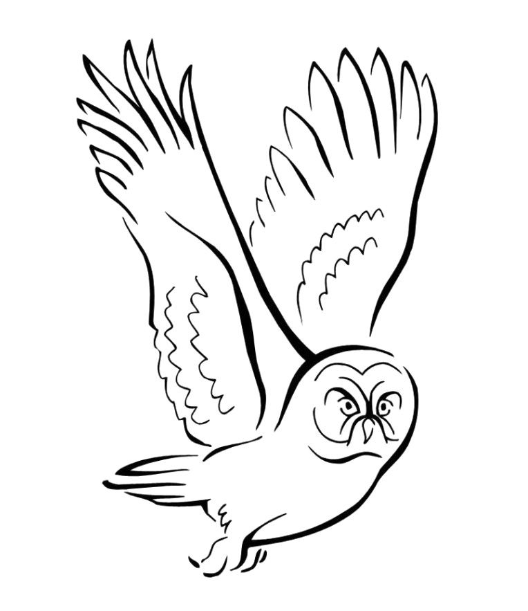 flying bird coloring pages - photo#30