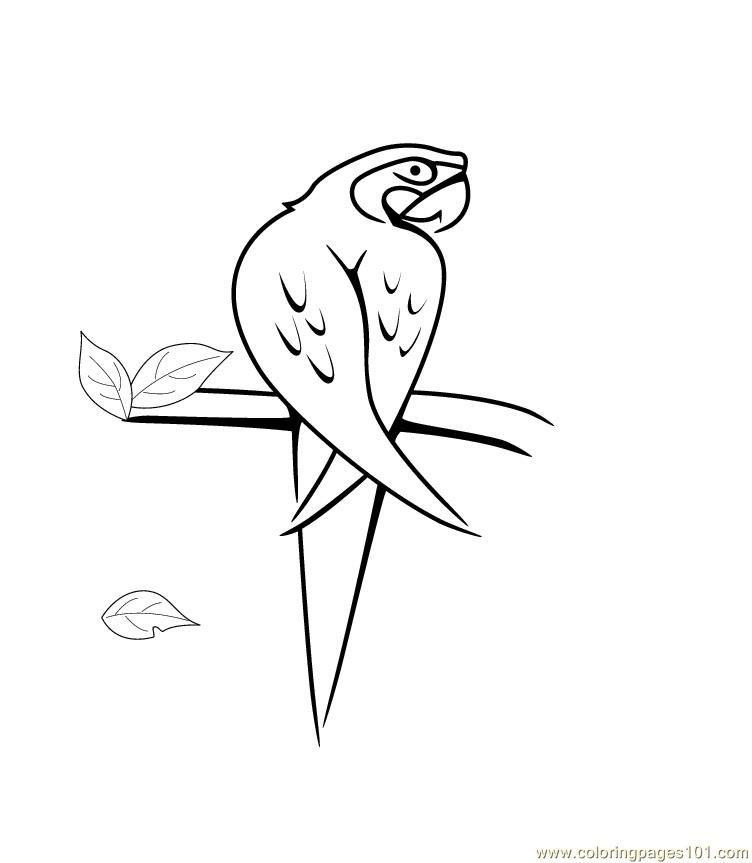 Coloring Pages Parrot Birds Gt Parrots