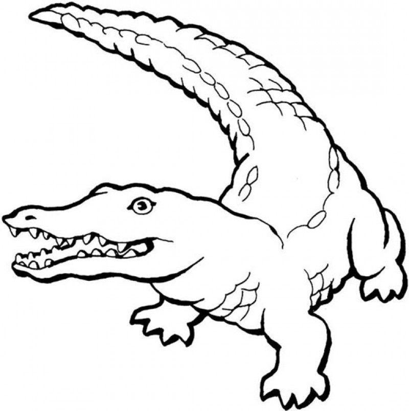 alligator coloring page 21uw0972 hd printable coloring pages - Alligator Coloring Pages Printable
