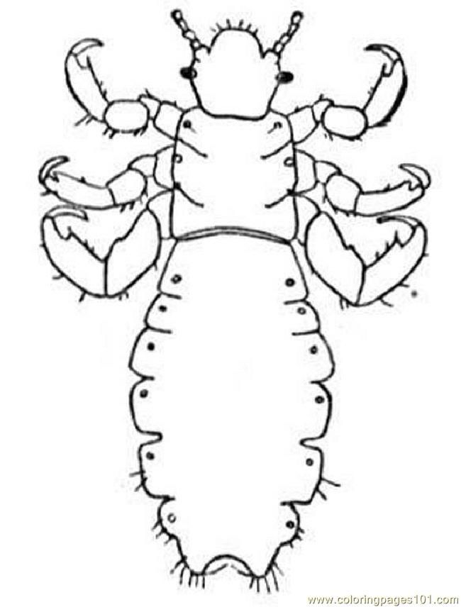 Coloring Pages Insect11 (Animals u0026gt; Insects) - Free Printable - AZ ...