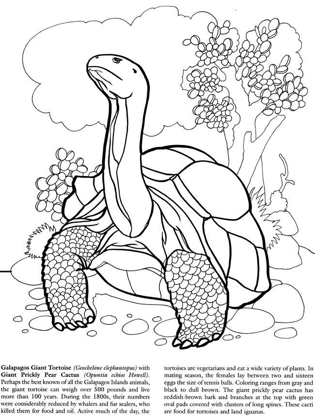 galapagos giant tortoise coloring pages books - Prickly Pear Cactus Coloring Page