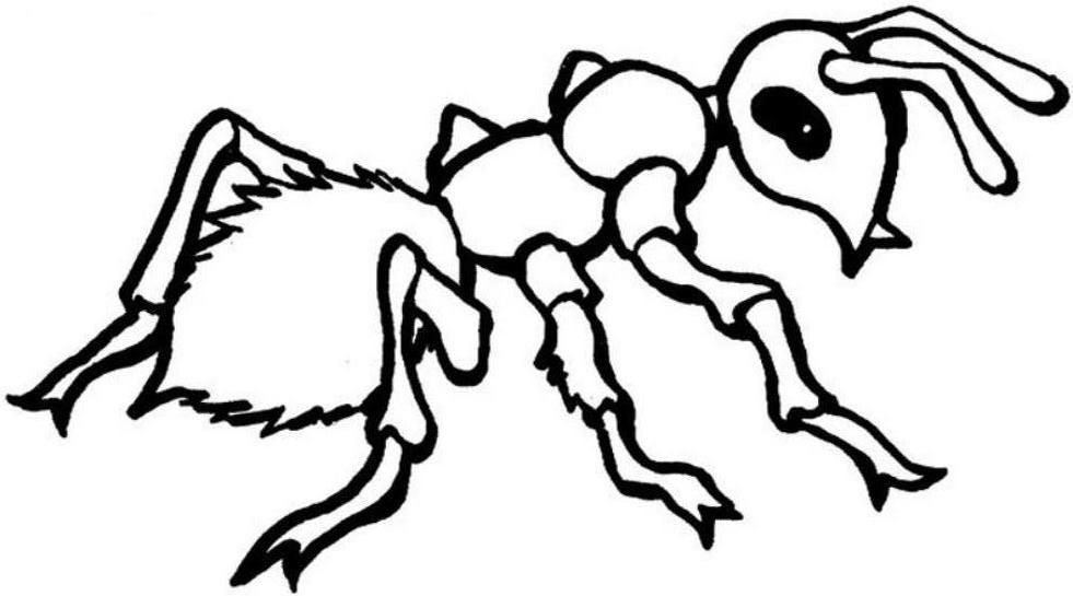 Insect color pages coloring home for Ant coloring pages for kids