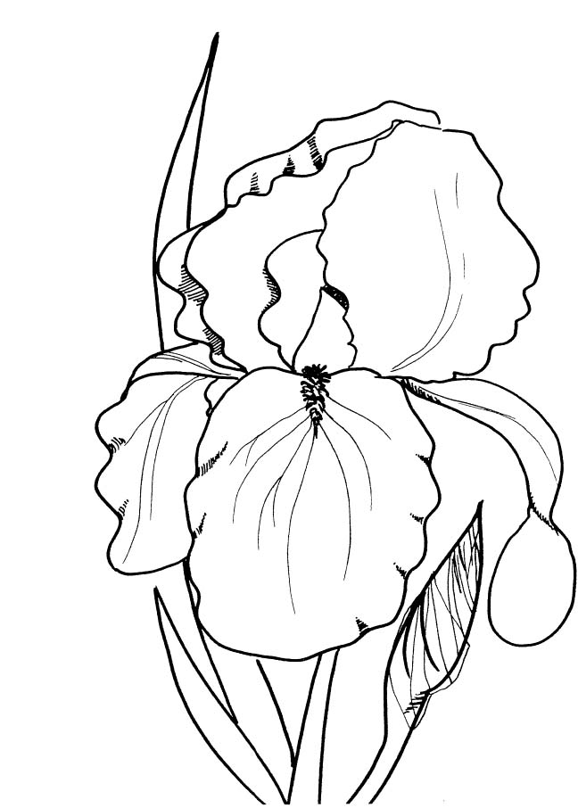 Spring flowers to color and print az coloring pages for Spring flowers coloring pages printable