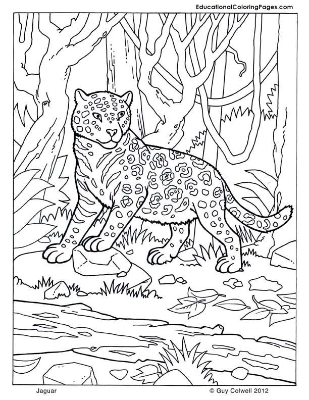 Jaguar coloring | Dessins