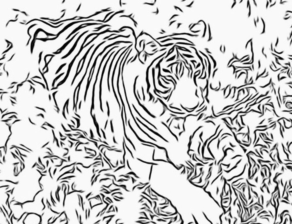 1000 Free Coloring Pages