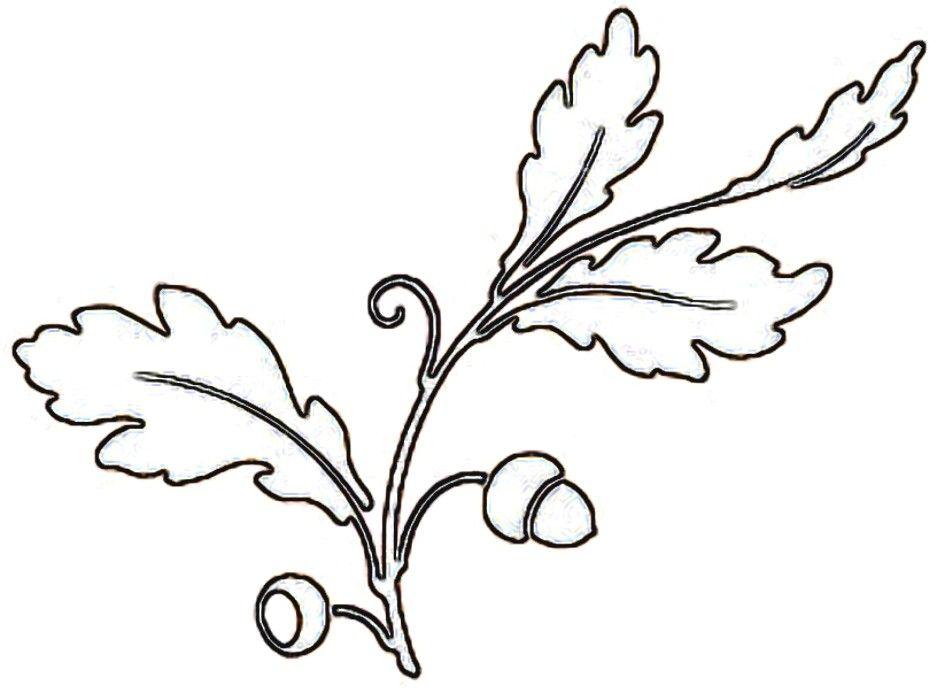 Oak Leaf And Acorn Drawing Acorn Leaf Drawing Oak
