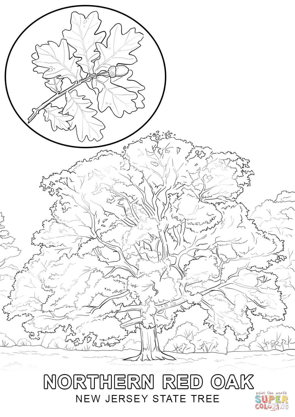 New Jersey State Tree Coloring Page Free Printable Coloring Pages Coloring Home