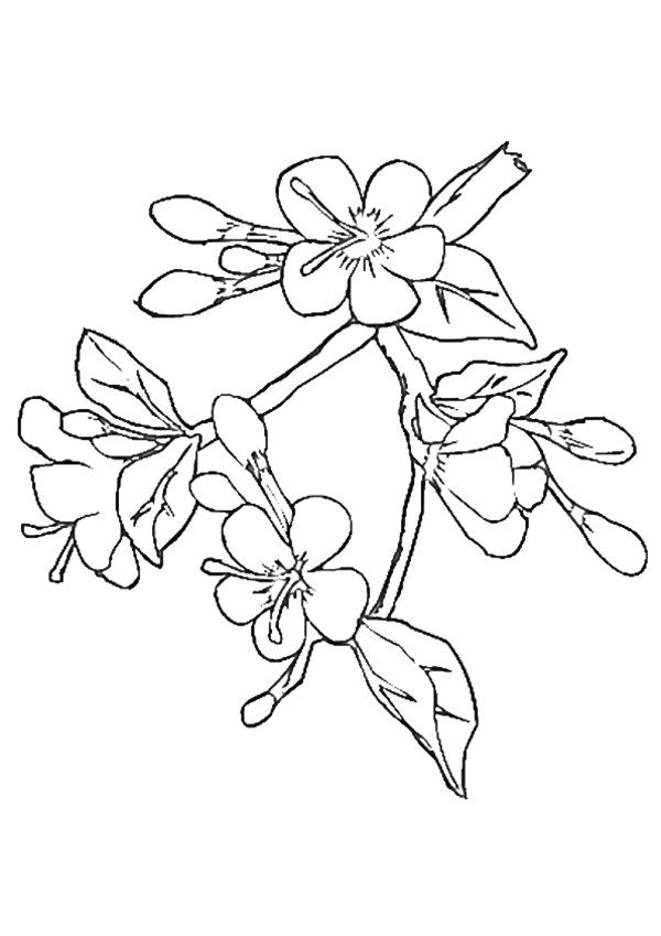 blossoms coloring pages - photo#6