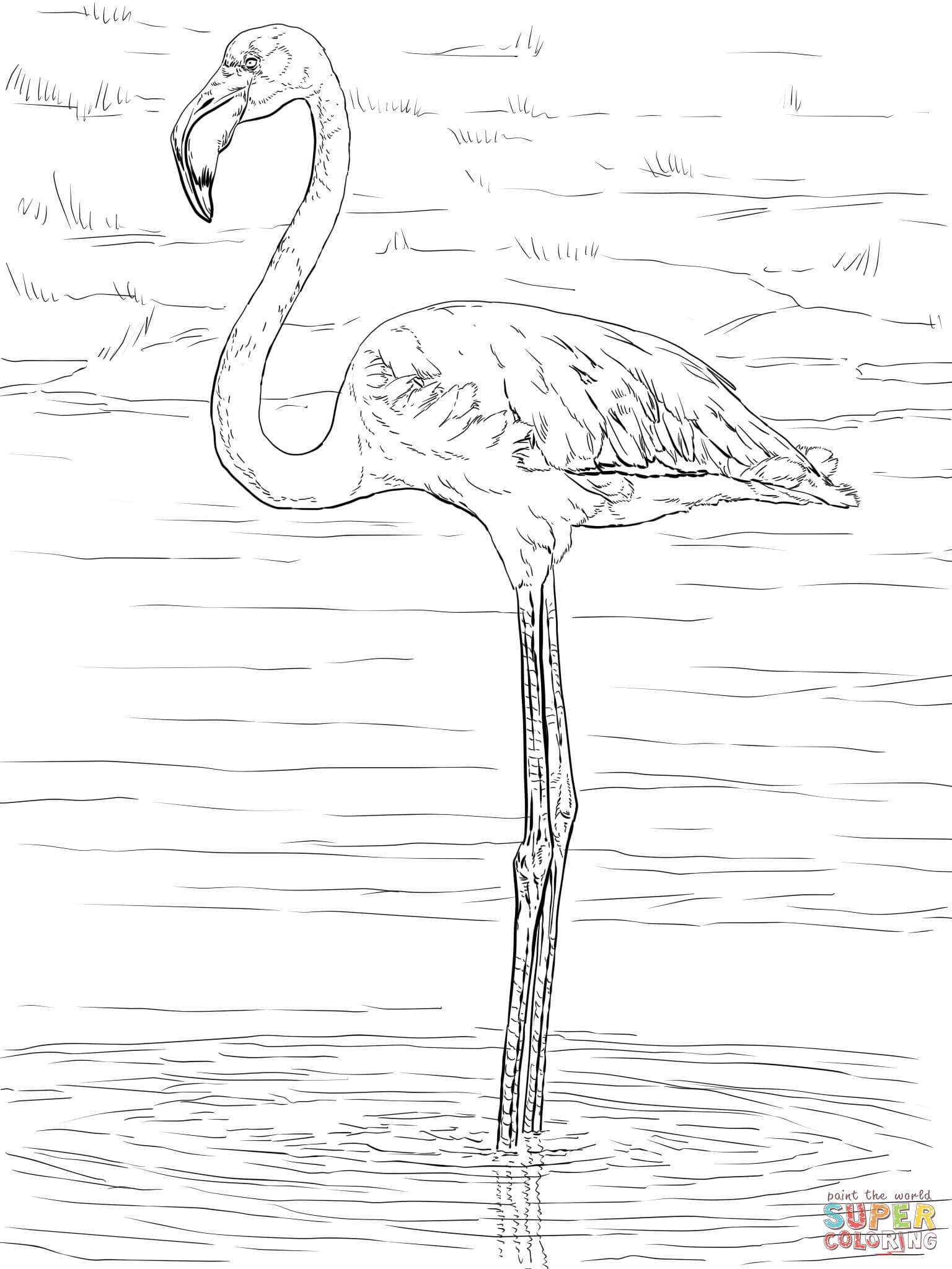 Birthday Flamingo Coloring Pages Coloring Home