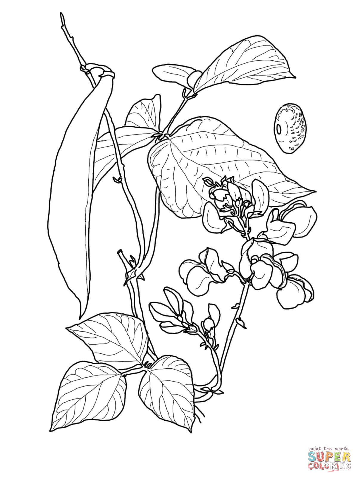 bean sprout coloring page free printable coloring pages