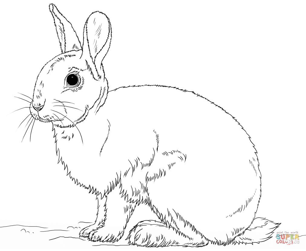 Rabbits coloring pages | Free Coloring Pages