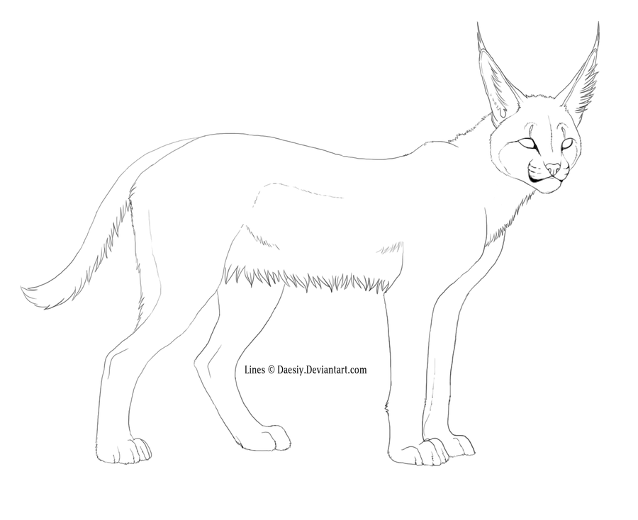 9 Pics of Caracal Coloring Pages - Caracal Cat Coloring Pages ...
