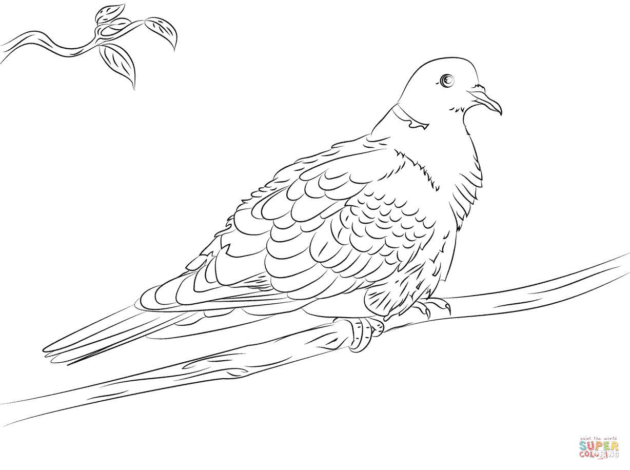 Collared Dove Coloring Page | Free Printable Coloring Pages ...