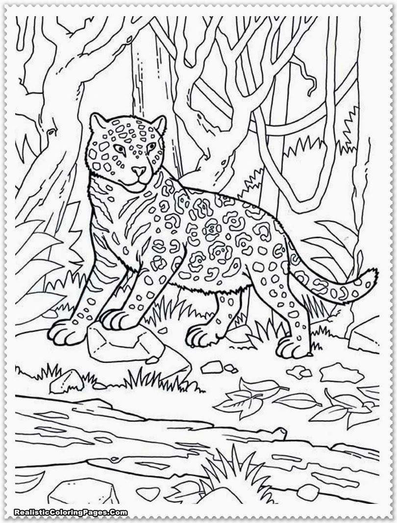 Jungle Animals Coloring Pages Free