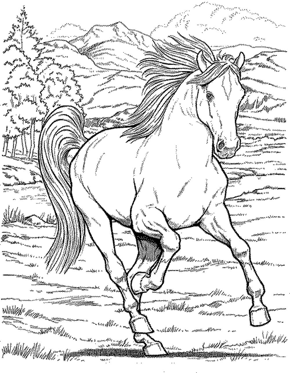 Horse coloring books for kids - Horse Coloring Pages For Kids Printable Kids Colouring Pages Horse Coloring Pages For Kids Printable Kids Colouring Pages