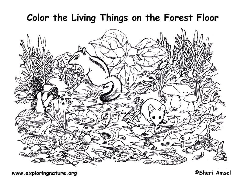 forest coloring pages - photo#32